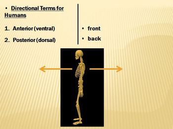 Anatomical Terms Notes Power Point Package