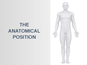 Anatomical Terms for the Human Body