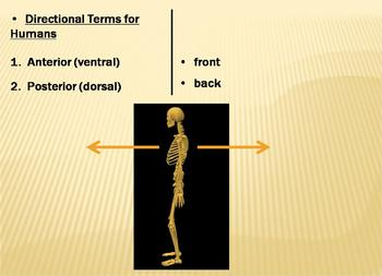Anatomical Terms part 1 Powerpoint presentation