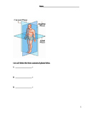 Anatomical and Directional Terms Worksheet