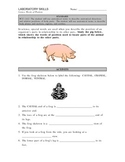 Anatomical directions activity