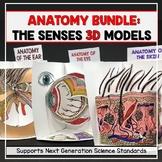 Anatomy 3D Model Bundle - Senses: Ear, Eye, and Skin