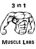 Muscular System Anatomy-Biology 3 in 1 Muscle Lab Package