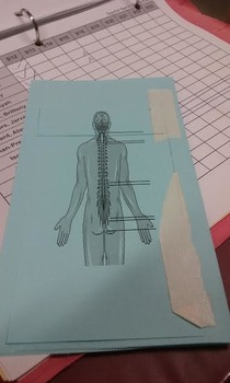 Anatomy Body Cavity Foldable Activity