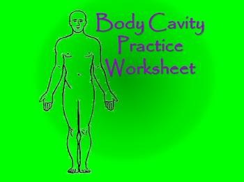 Anatomy: Body Cavity Practice Worksheet