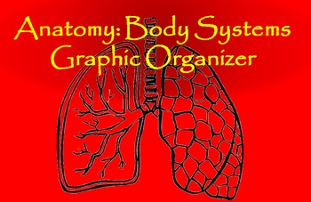 Anatomy: Body Systems Graphic Organizer