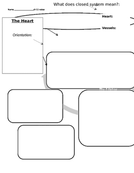 Anatomy Cardiovascular Graphic Organizer