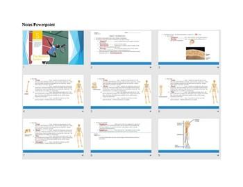 Anatomy Chapter 5: Skeletal Sysem
