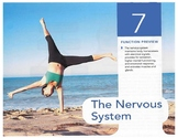 Anatomy Chapter 7: The Nervous System