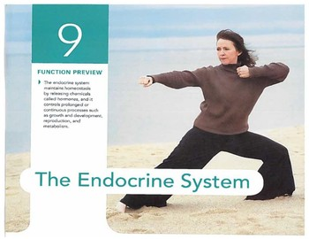 Anatomy Chapter 9: Endocrine System