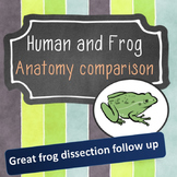 Human and Frog Anatomy Comparison: Structure and function