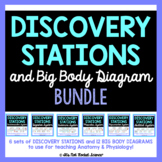 Anatomy Body System Diagrams and Discovery Stations Bundle