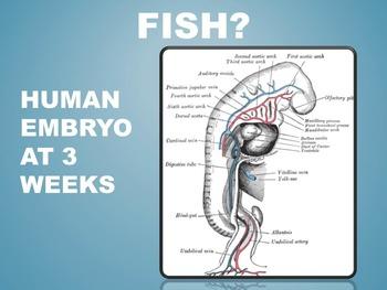 Anatomy: Evolution of the Vagus Nerve.