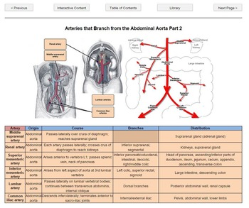 Anatomy Flashcard Learning System Overview