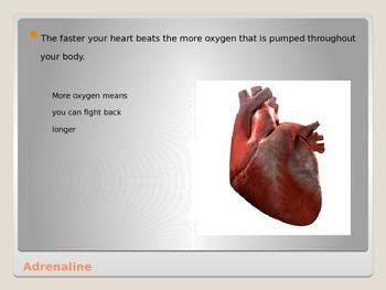 Anatomy - Human Body - Adrenal Gland