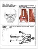 Anatomy, Human Body and Health Unit Homework