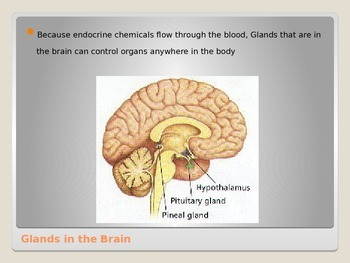 Anatomy - Human Body - Hormones
