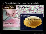 Human Body Levels of Organization, Cells, Tissues, Organs,