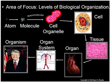 Human Body Levels of Organization, Cells, Tissues, Organs, Organ Systems