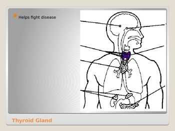 Anatomy - Human Body - Parts of the Endocrine System