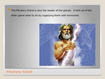Anatomy - Human Body - Pituitary Gland