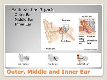 Anatomy - Human Body - Sense of Hearing w/worksheet (POWERPOINT)