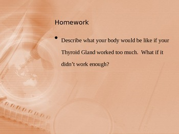 Anatomy - Human Body - Thyroid Gland