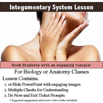Anatomy - Integumentary System