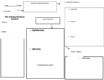 Anatomy Integumentary system, graphic organizer