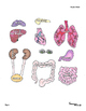 Anatomy Major Body Organs Cut and Paste Science Activity