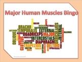 Anatomy/ Medical Terminology: Major Human Muscles Bingo Game