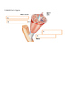 Anatomy Muscular System Intro Quiz