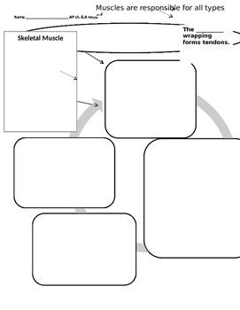 Anatomy Muscular System graphic organizer, intro