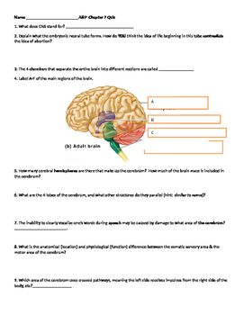 Anatomy Nervous System quiz