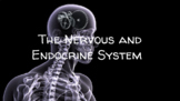 Anatomy: Nervous and Endocrine Systems Slides- EDITABLE!