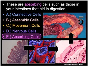 Anatomy, Levels of Organization Cell, Tissue, Human Body Quiz Game
