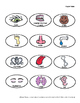 Anatomy Our Amazing Bodies Trivia File Folder Game & Cut a