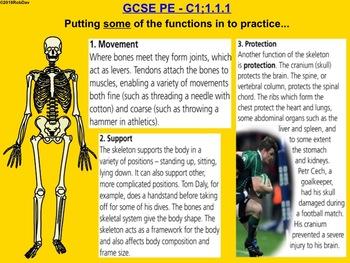Anatomy & Physiology - 1 - Skeletal System Intro