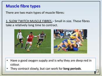 Anatomy & Physiology - 10 - Muscle Fibre Types