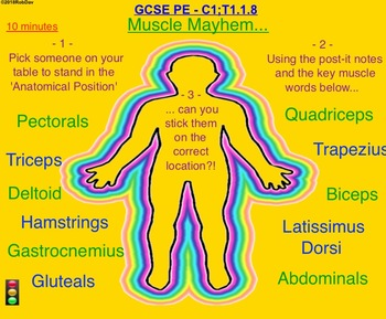 Anatomy & Physiology - 7 & 8 - Muscle System, Names & Locations