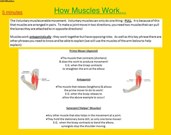 Anatomy & Physiology - 9 - How Muscles Work