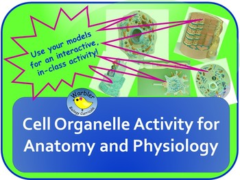 Cell Organelle Activity for Anatomy & Physiology