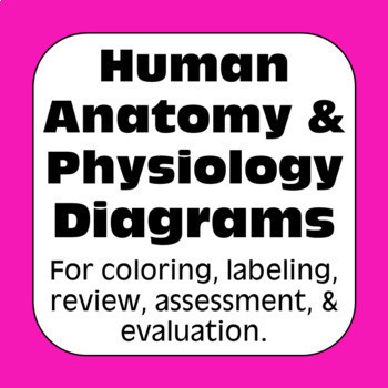 Anatomy & Physiology Human Body Systems Diagrams for High School Biology