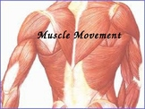 Anatomy & Physiology Muscle Movements