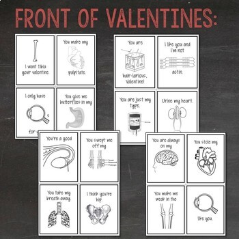 Anatomy & Physiology Valentines