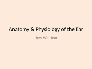 Anatomy & Physiology of the Ear: How We Hear