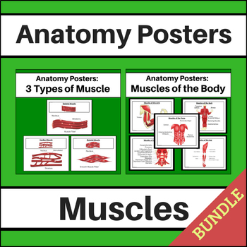 Anatomy Posters: Muscles BUNDLE