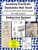 Anatomy Practicals-Life-Sized Endocrine System PROJECT!