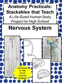 Anatomy Practicals-Life-Sized Nervous System PROJECT!