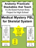 Anatomy Practicals-Life-Sized Skeletal System MEDICAL MYST